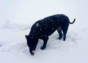 greyson snowday